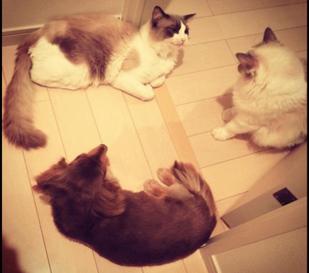 ローラの猫と犬
