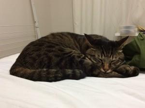 猫 サラン