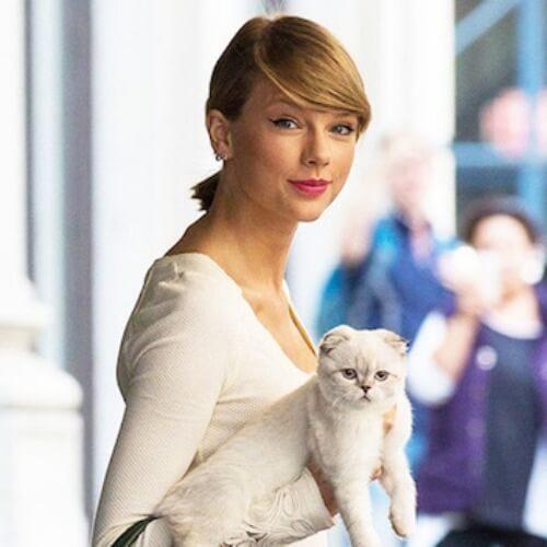 テイラースウィフトの飼っている猫の名前・種類と、同じ猫の飼い方