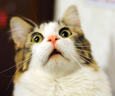 後悔する前に!猫が布団におもらしする原因・された時の対処方法・されない為の予防法は?
