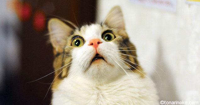 ネコが布団でおもらし