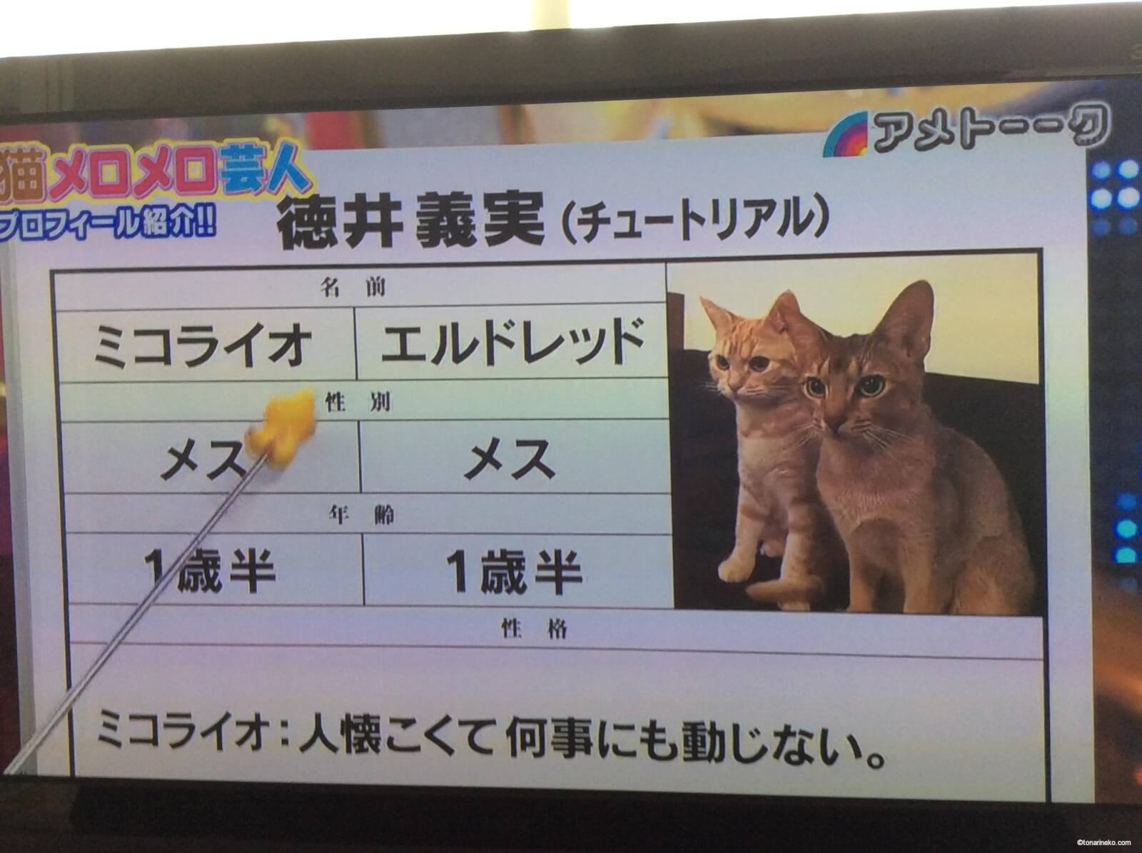 徳井の飼っている猫