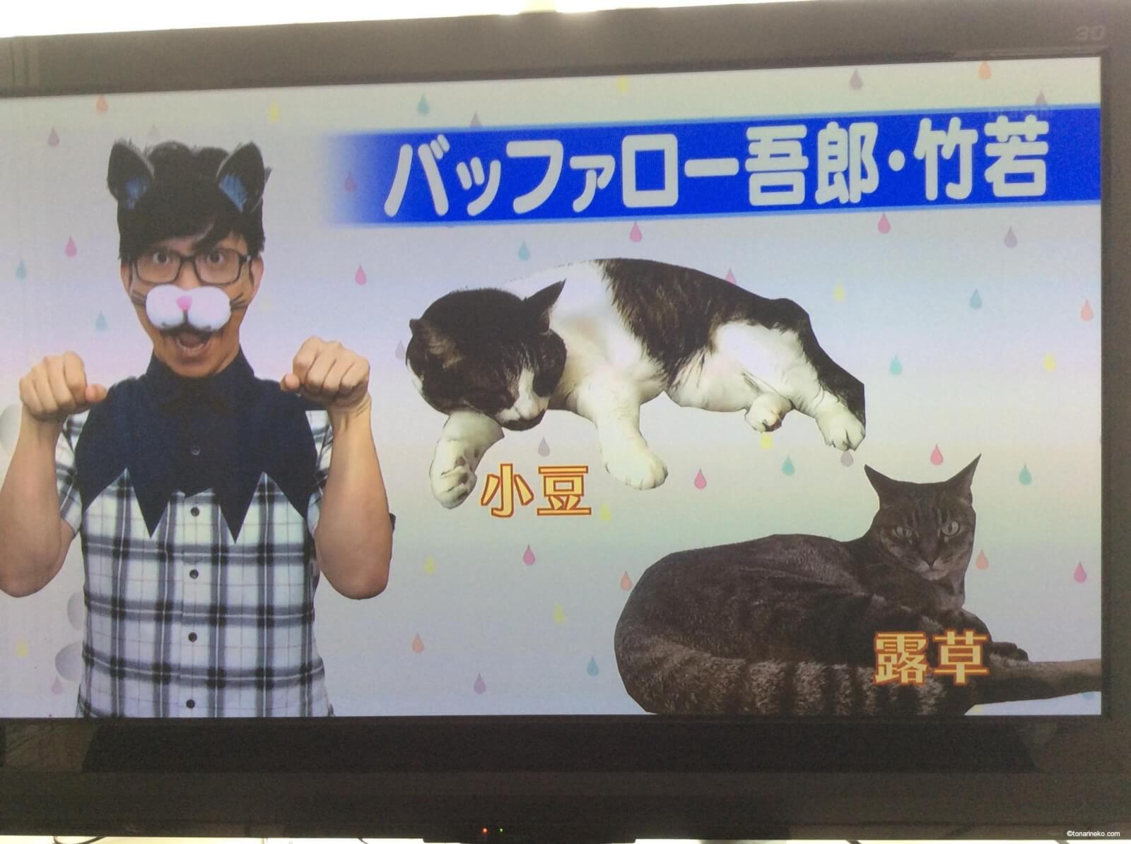 バッファロー吾郎・竹若元博 の猫