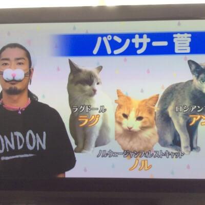 パンサー菅の飼っている猫