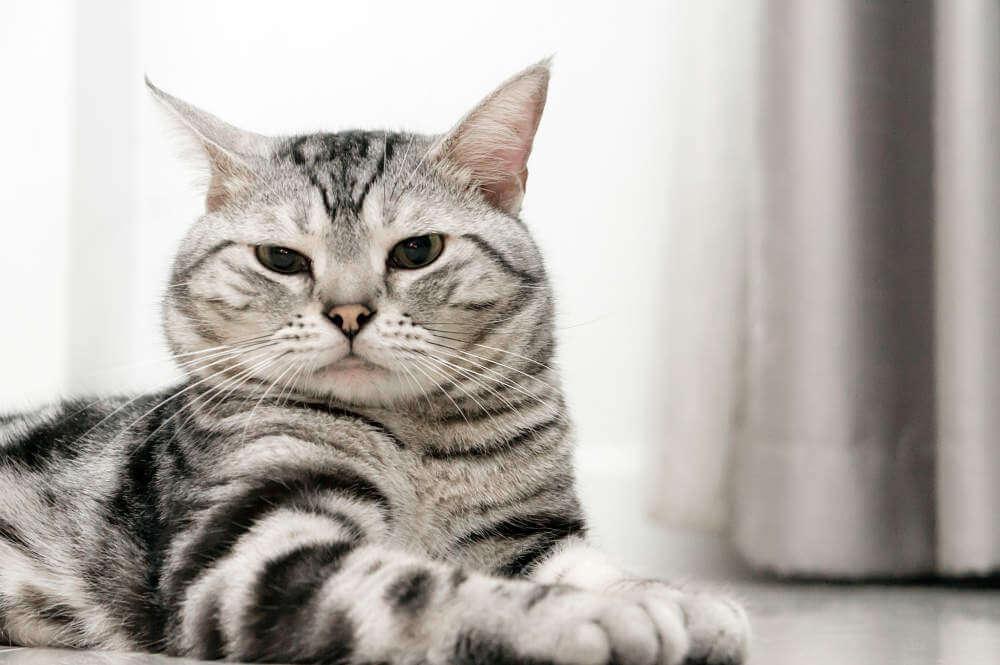 Cat Ear Bowl