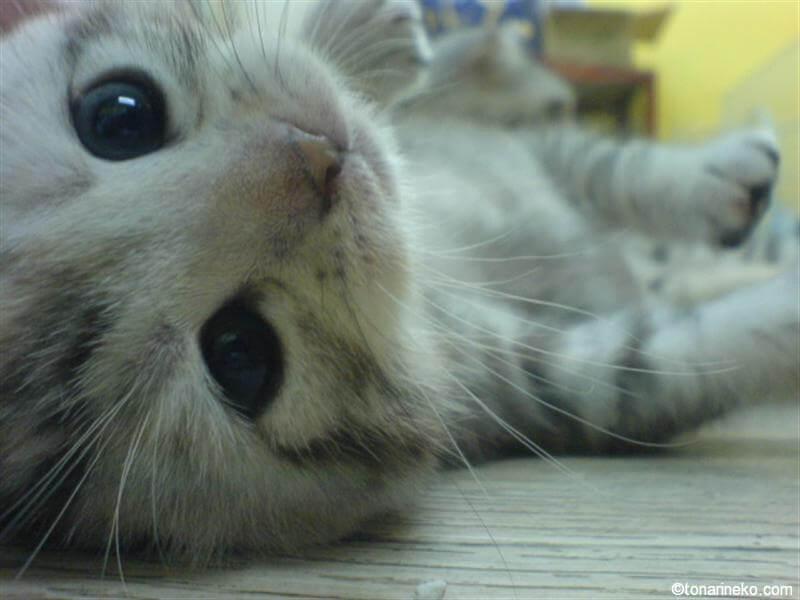 猫の癒し顔