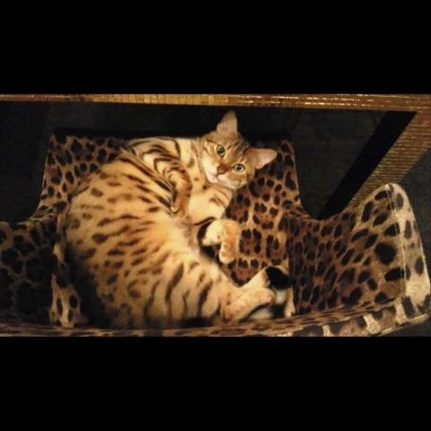 藤原紀香の飼っている猫