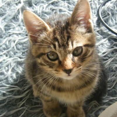 生後3ヶ月の子猫(サラン)
