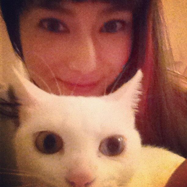 柴咲コウと猫