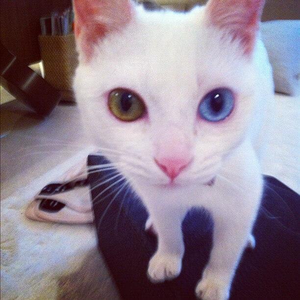 柴咲コウの猫のえる