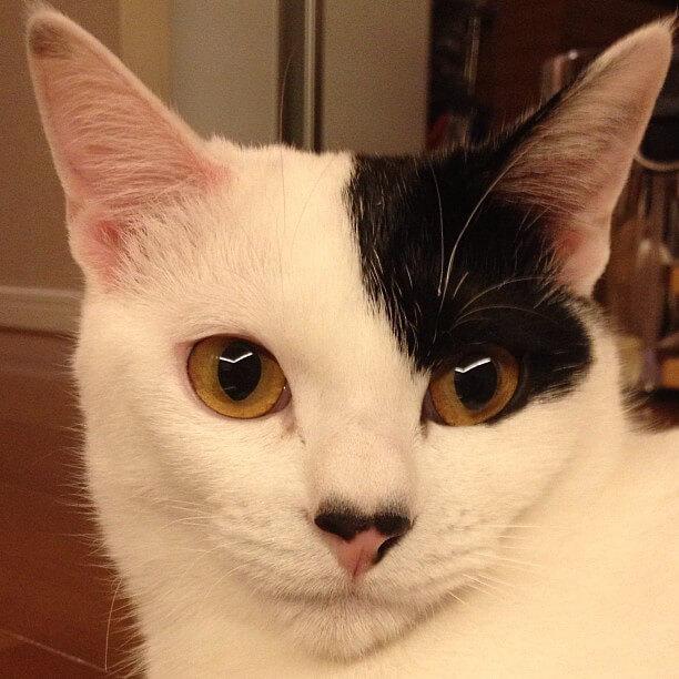 柴咲コウの猫ルナ