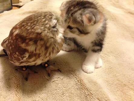 フクとマリモのキス