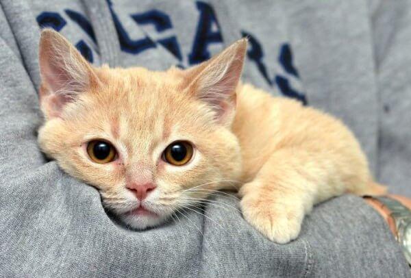 kittea_cat