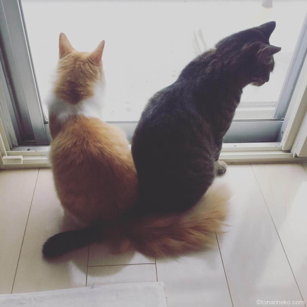 猫のサランと愛之助