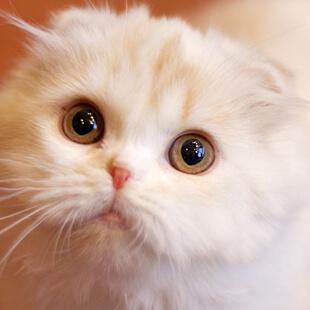 http://catmocha.jp/ikebukuro/cats