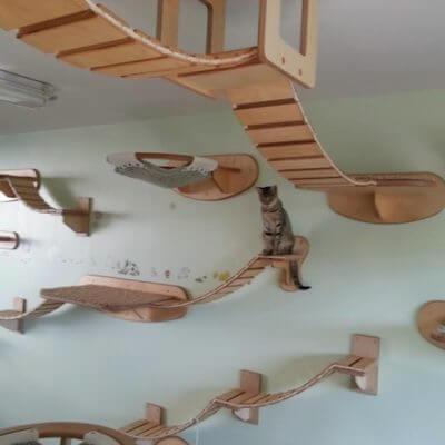 賃貸和室で猫を飼う - Goo知恵袋