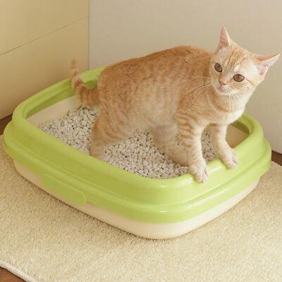 たったこれだけ☆トイレ以外でウンチ・お漏らしをしてしまう猫のしつけ方