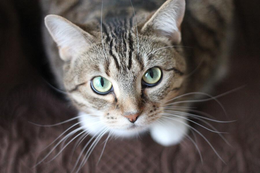 cat20160625_003