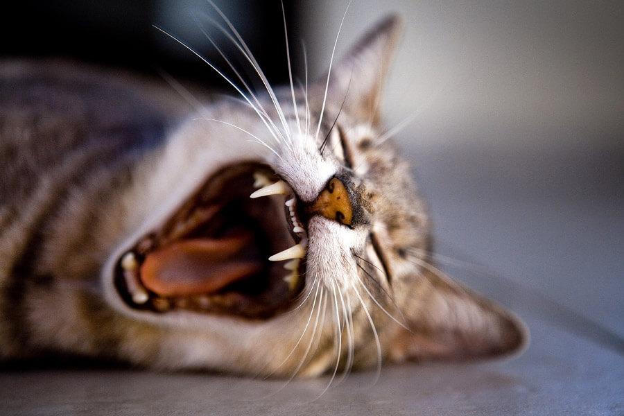cat20160625_012