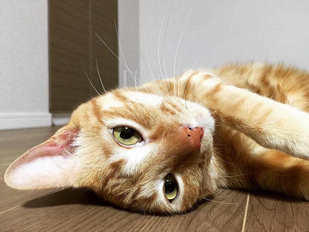 cat20160625_047