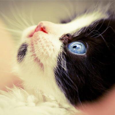 子猫の平均排せつ回数は○回|トイレチェックで愛猫の健康を守ろう♡