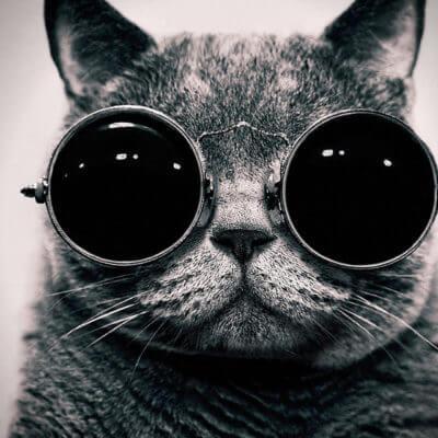 サングラスをした猫