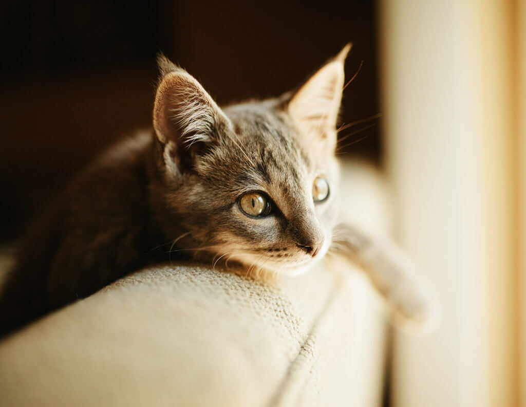 ソファー×猫