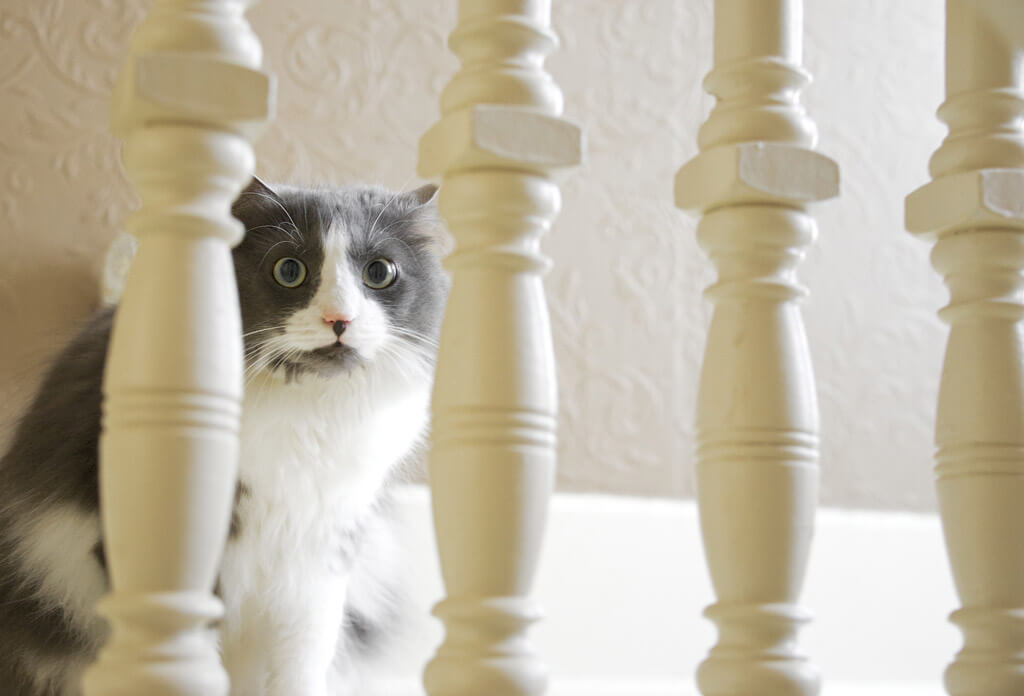 まんまるおめめの猫