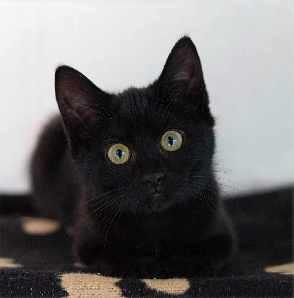 黒猫の画像 p1_34
