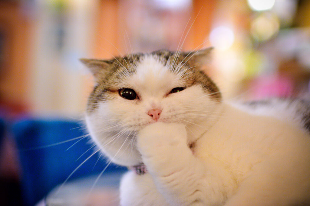 手を噛む猫