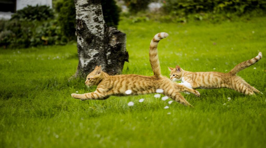【特徴別どっちがタイプ?】オス猫とメス猫の違いまとめ となりねこ