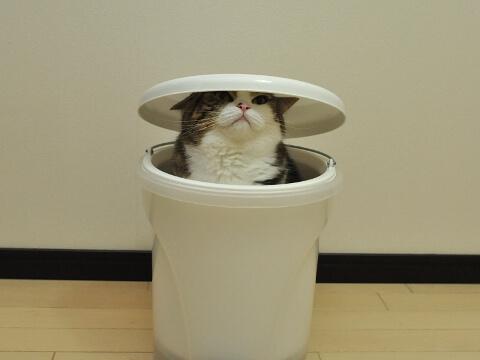 ゴミ箱にハマる猫