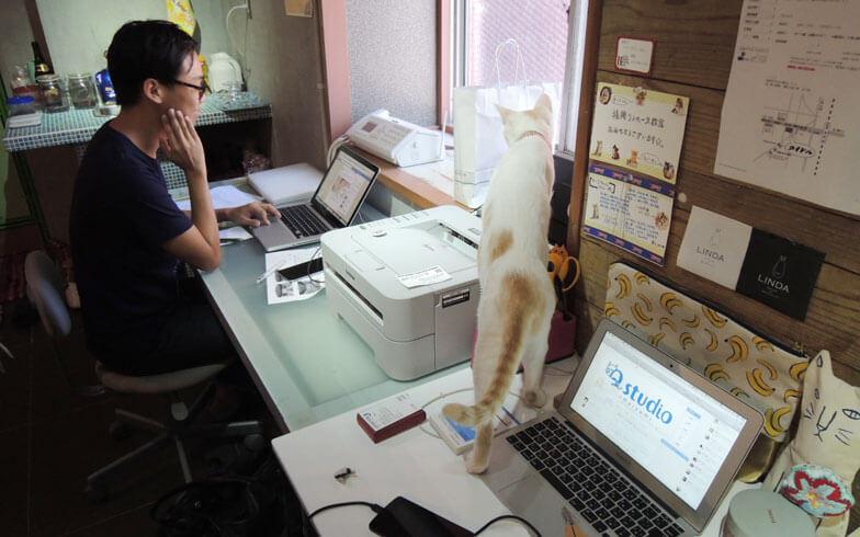 猫が仕事の邪魔をする