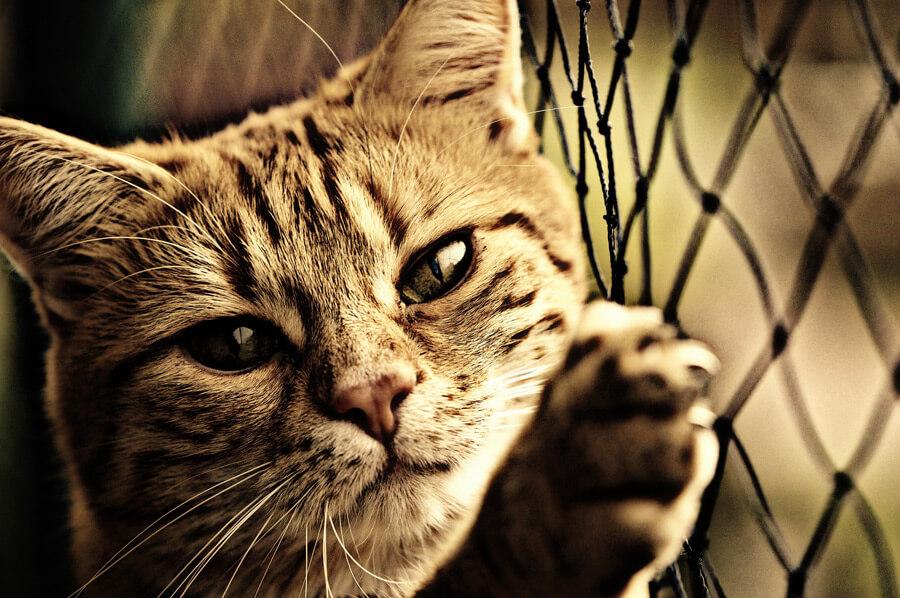 cat20160625_002