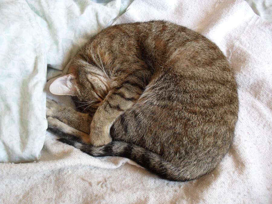 cat20160625_008