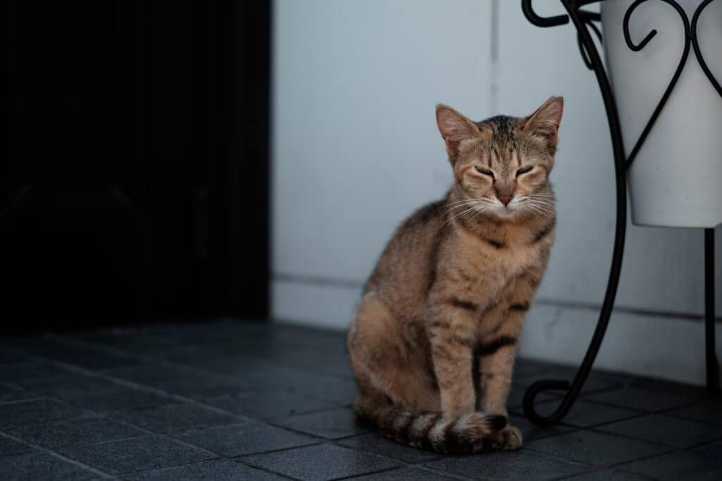 暑い猫-1024x683