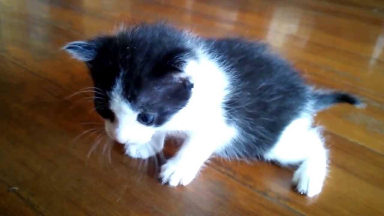 子猫の歩行訓練