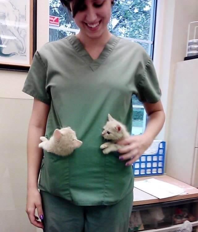 子猫と病院