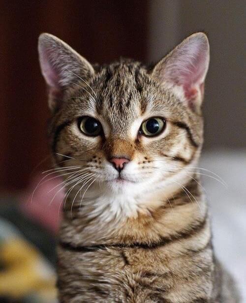 美人猫顔だにゃ〜★