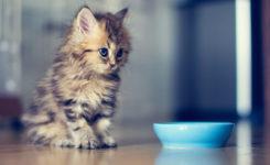 長毛種子猫