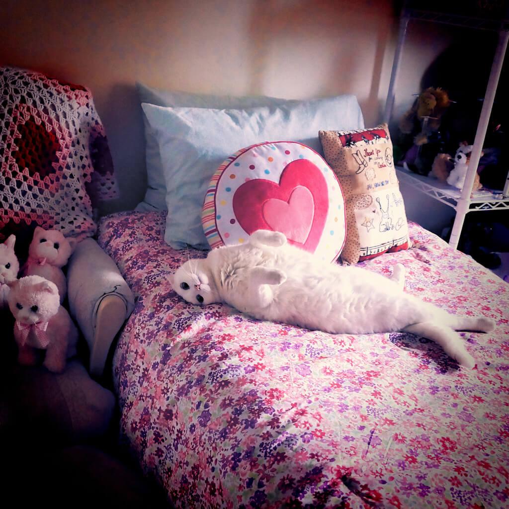 ベットに寝る猫