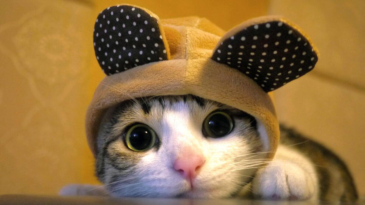 猫の鼻が湿ってる
