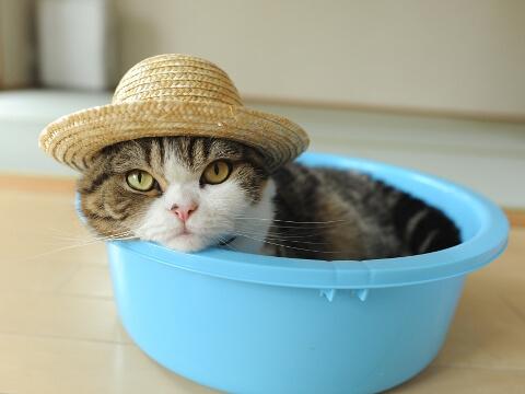 夏っぽい猫