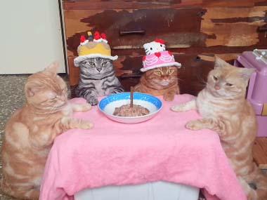 猫の誕生日会
