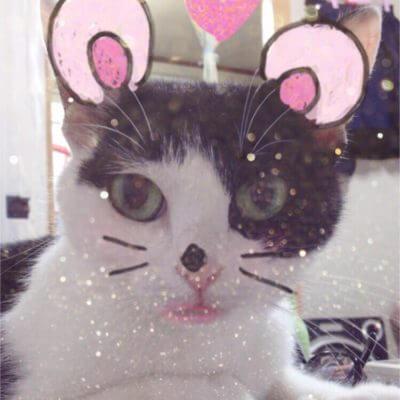 人気自撮りアプリ「SNOW」♡猫も反応するってホント!?