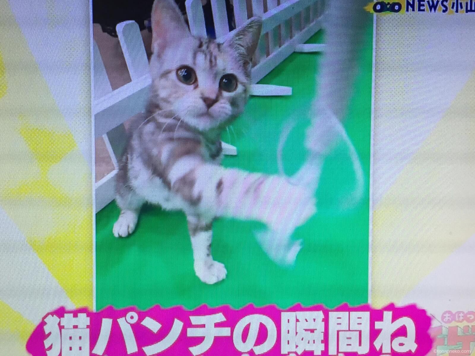 猫パンチ写真