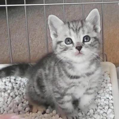 ケージ子猫