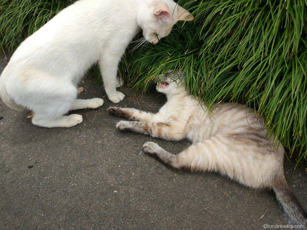 猫寺の猫2