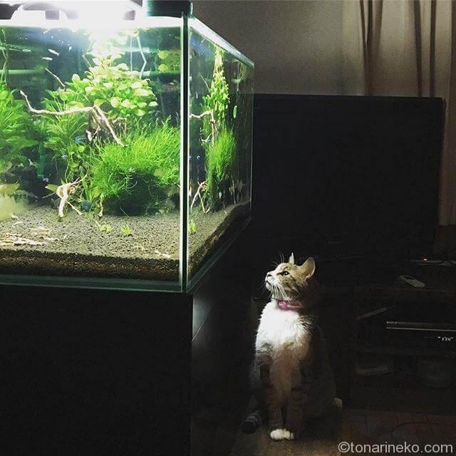 魚に注目!