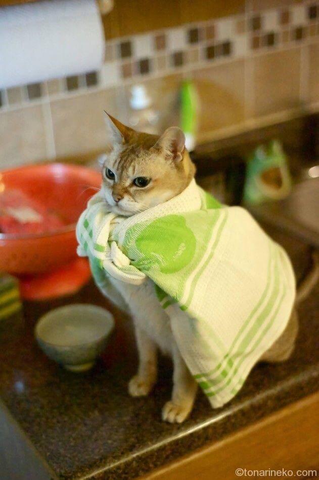 タオルと猫